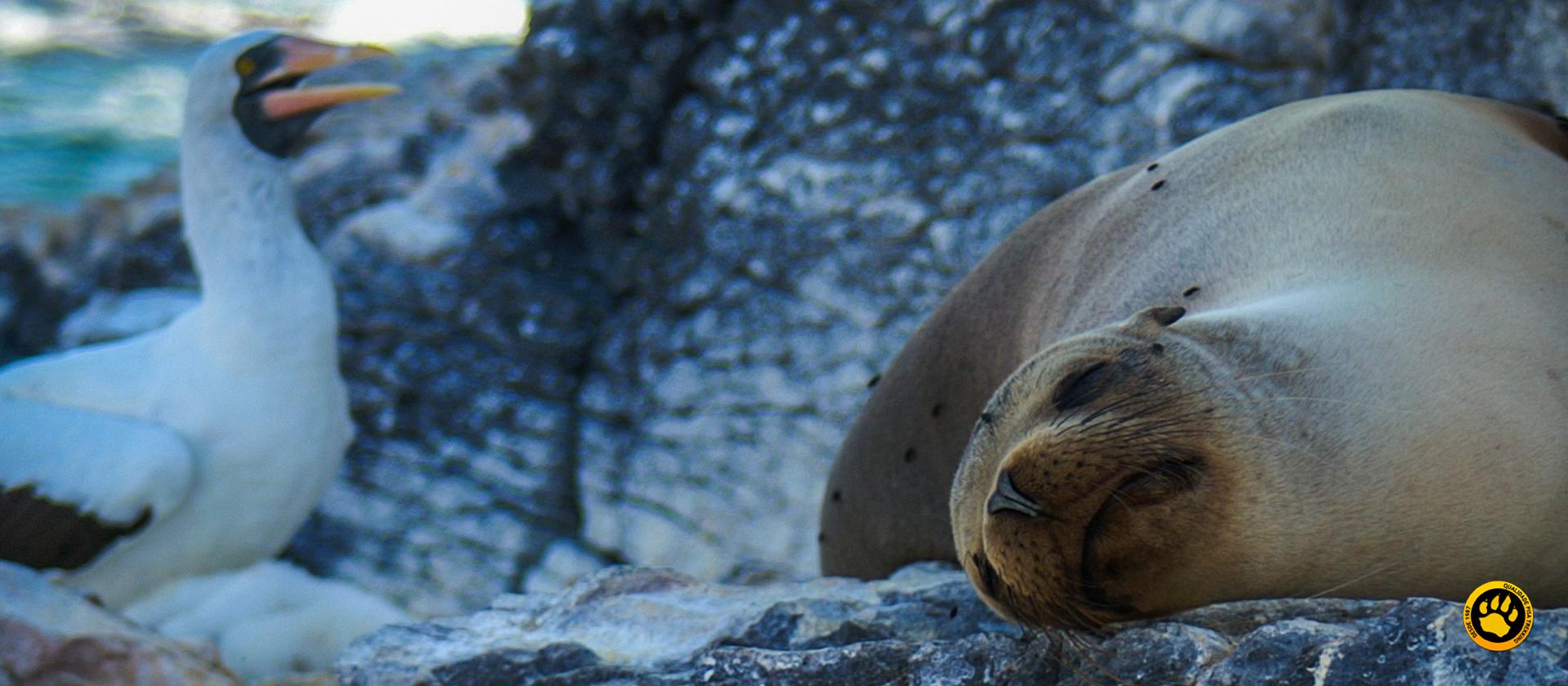 Tudo sobre Galápagos