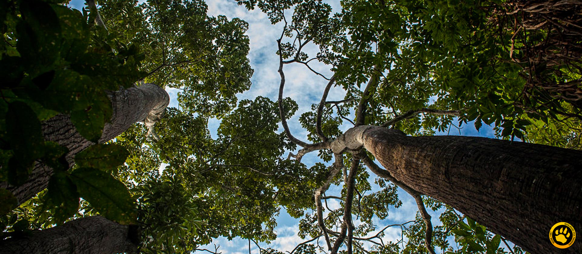 Desafios na Reserva Mamirauá: como ajudar