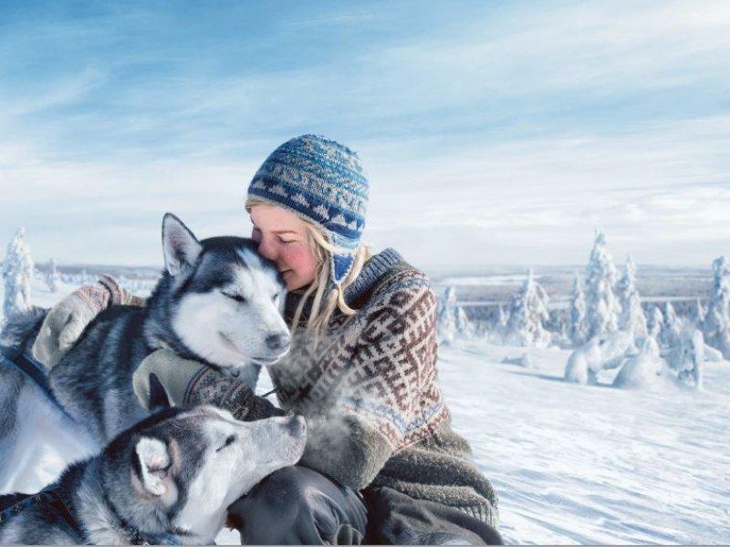 Huskies Finlandia - Credito: Antti Vitala. visitfinland.com