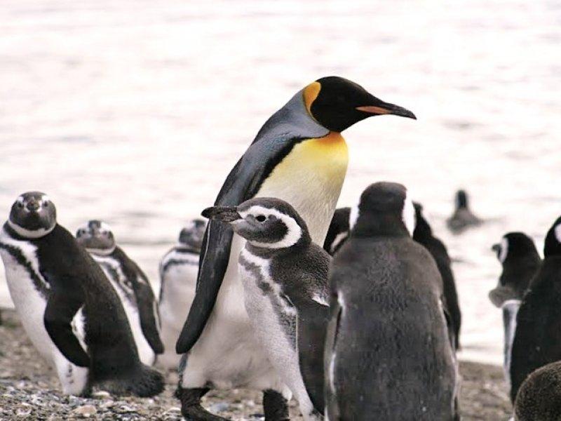 Caminhada na Ilha dos Pinguins (Opcional) - Foto: Claudia Ribeiro