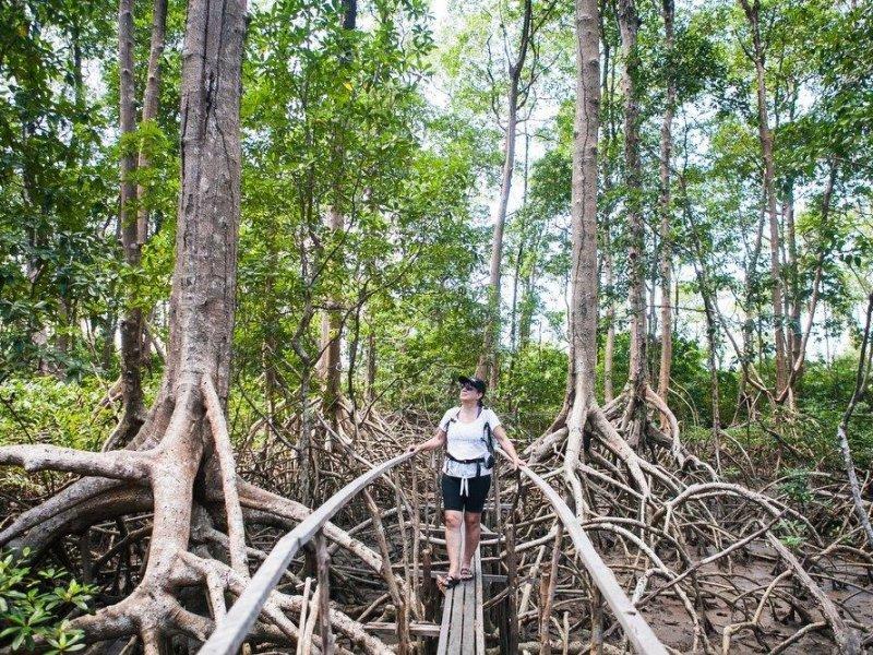 Caminhada pela Floresta de Mangue - Ilha de Marajó