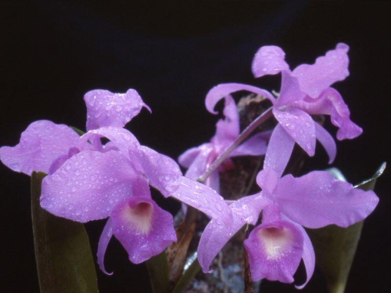 Flora da região