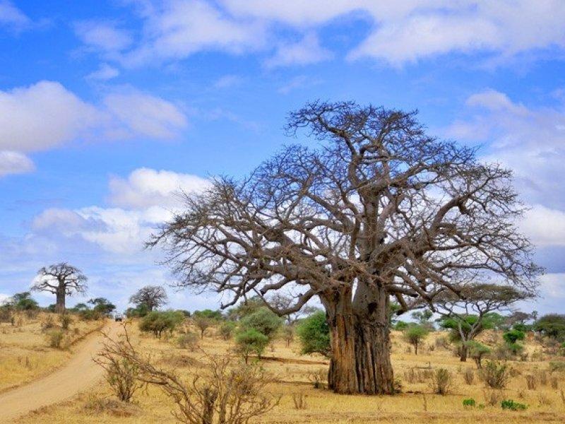 Safari na Tanzânia