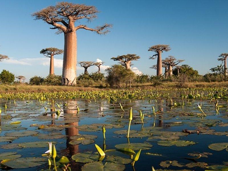 Pacote para Madagascar