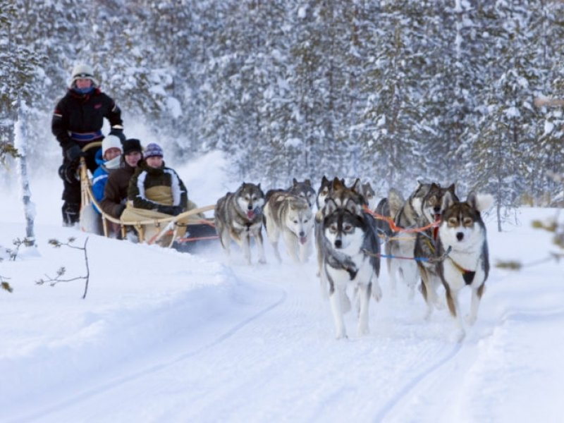 Laponia (Finlandia) - Trenós Huskies