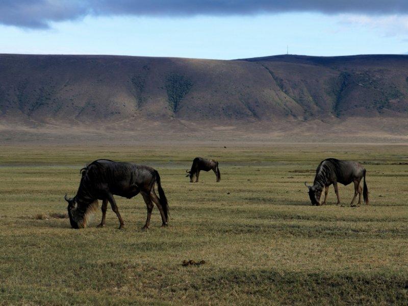 Cratera de Ngorongoro