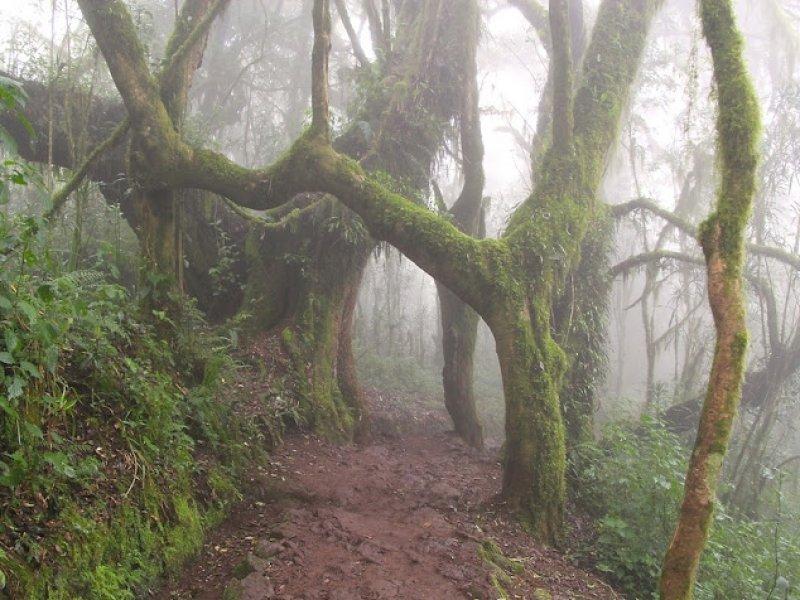 Trilha - Kilimanjaro