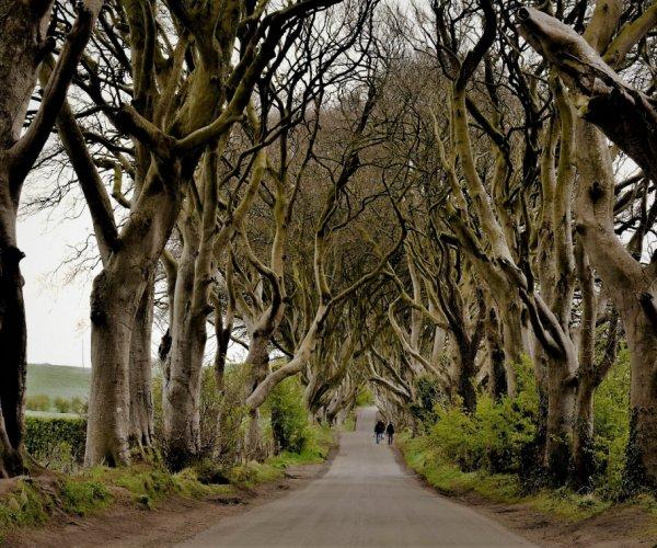 Dark Hedges - Irlanda do Norte