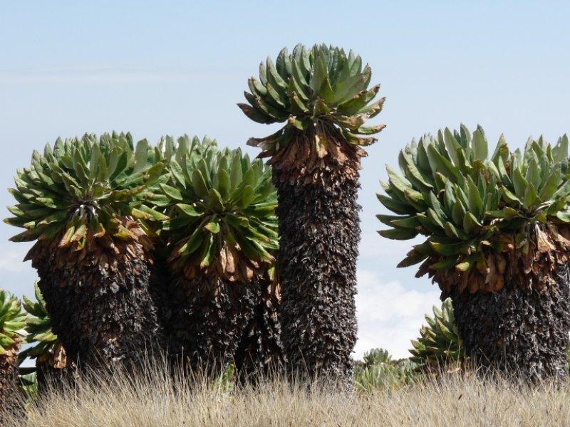 Vegetação típica