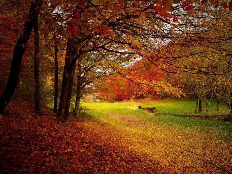 Cores de Outono na Escócia