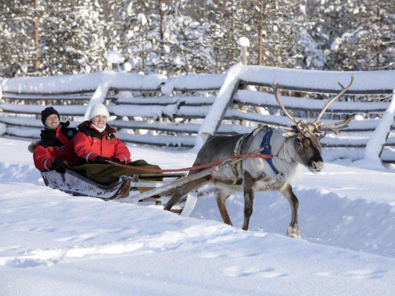 Laponia (Finlandia) - Trenós renas