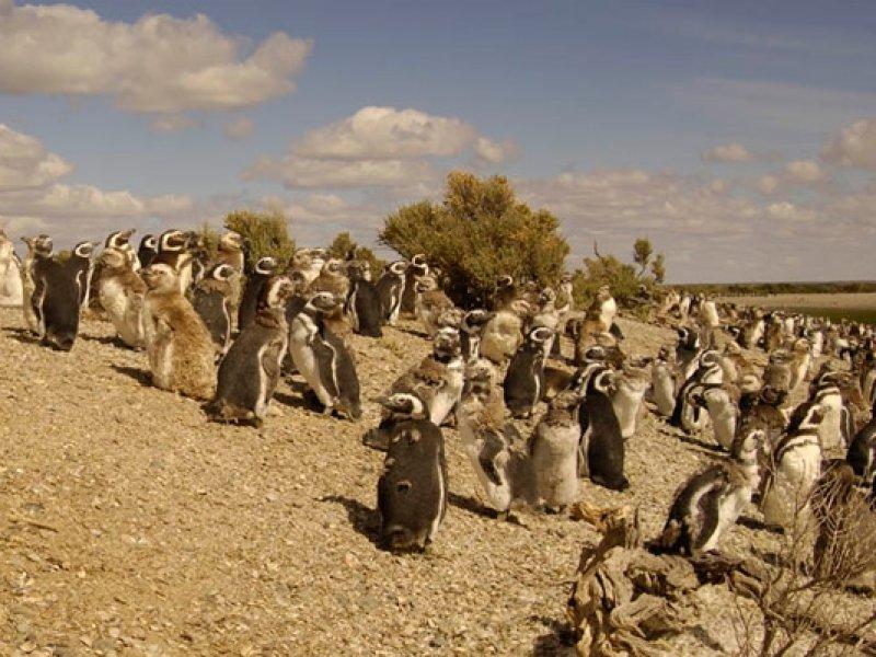 cabo dos bahias - camarones - Patagonia - ruta 40