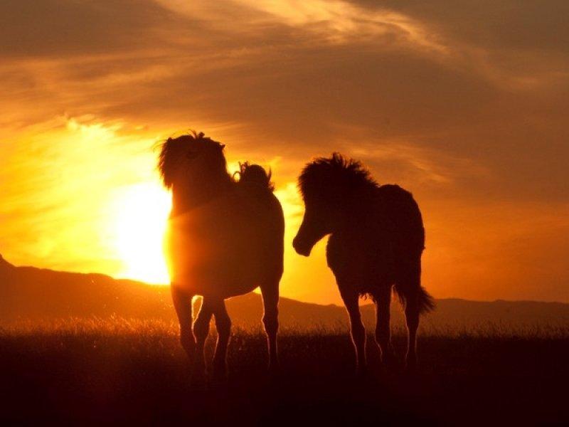 Cavalgada e Sol da Meia Noite
