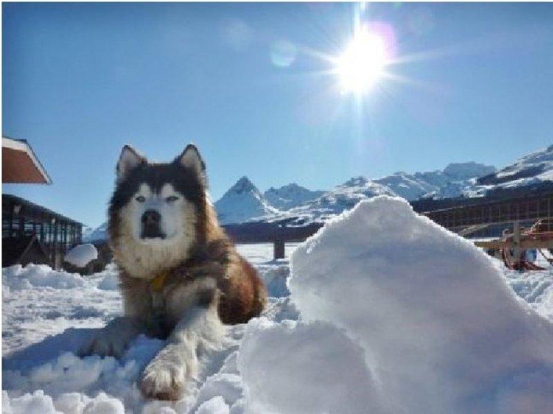 huskies ushuaia - opcional