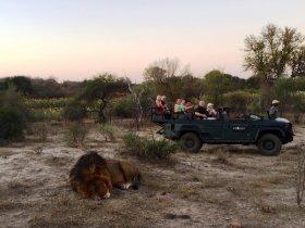 África do Sul - Cape Town e Safari no Karongwe Shiduli Lodge
