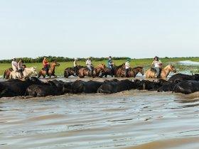Pará - Ilha de Marajó em Busca dos Búfalos