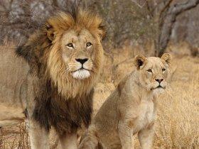 CARNAVAL - África do Sul - Cape Town e Safári no Kruger
