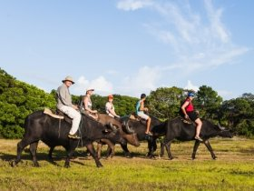 Pará - Descubra Belém e a Ilha de Marajó
