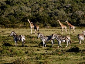 África do Sul Luxo - Cape Town e Safari no Sabi Sabi Private Reserve