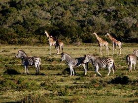 África do Sul Luxo - Cape Town e Safari no Sabi Sabi Private Reserve