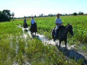 CARNAVAL - Pantanal Sul - Fazenda Aguapé