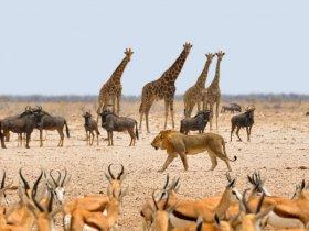Namíbia de Norte a Sul
