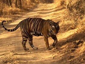 Grupo Novembro - Índia - Safári no Parque Nacional Ranthambore e Triângulo Dourado