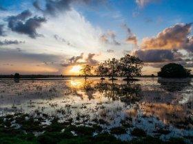 Pará - Descubra Belém, Ilha de Marajó e Alter do Chão