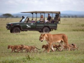 REVEILLON - África do Sul - Safári no Kruger, Cape Town e Vinícolas