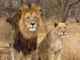 África do Sul Luxo - Cape Town e Safari na Lion Sands Private Reserve