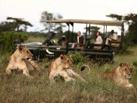 Safari de Luxo na Tanzânia