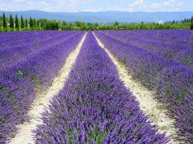 França - Provence 5 Sentidos com Lavanda