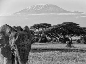 Tanzânia - Expedição Kilimanjaro com Carlos Santalena